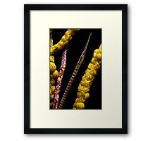 Peeking Pipefish Framed Print