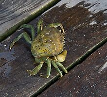 A Cromer Crab by BizziLizzy