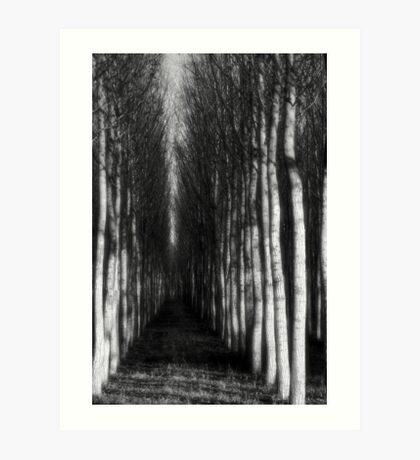 ghostly williows Art Print