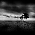 Shadows of a New Day (Mono) by springwatcher