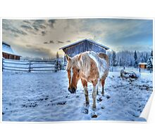 Palomino Paint and Barn in Winter Poster