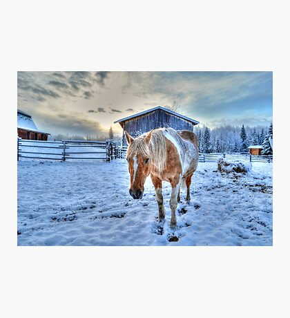 Palomino Paint and Barn in Winter Photographic Print