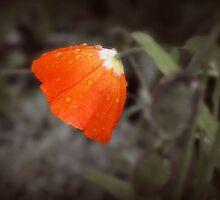 Orange Downer by Amber k.