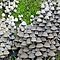 Fungi Galore Challenge.