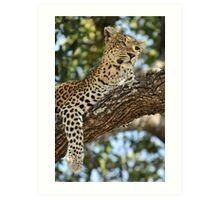 Leopard in repose - Okavango Delta, Botswana. Art Print