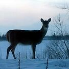 Doe at Dusk by Larry Trupp
