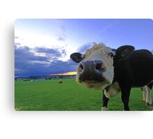 Cows & Storms Canvas Print