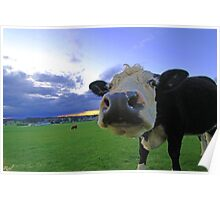 Cows & Storms Poster