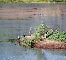 Bird Island- Willow Lake by johntbell