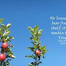 How fruit grows! by sarnia2