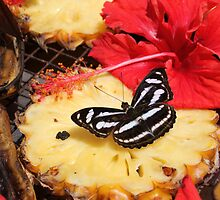 KL Butterfly Park - Pungent Pineapple by jaypea7