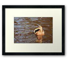 Duck2 Framed Print