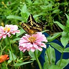 Black and Yellow beauty by Janice Carter