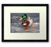Duck4 (on ice) Framed Print