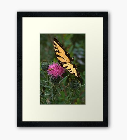 Swallowtail & Beetle on Thistle Framed Print
