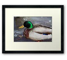 Duck5 (on ice) Framed Print