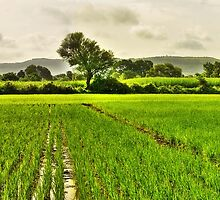 Song of the Season - HDR Panorama by Prasad