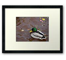 Duck8 Framed Print