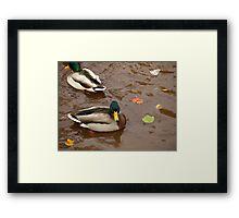 Duck9 Framed Print