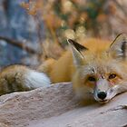 Fox Spirit, Park City by FoxSpirit