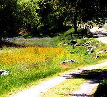 Walking trail  -Mckenzie Preserve California by MarthaBurns