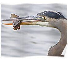 Expert Angler Poster