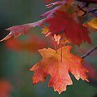 Falling Leaf - Park City, Utah by FoxSpirit