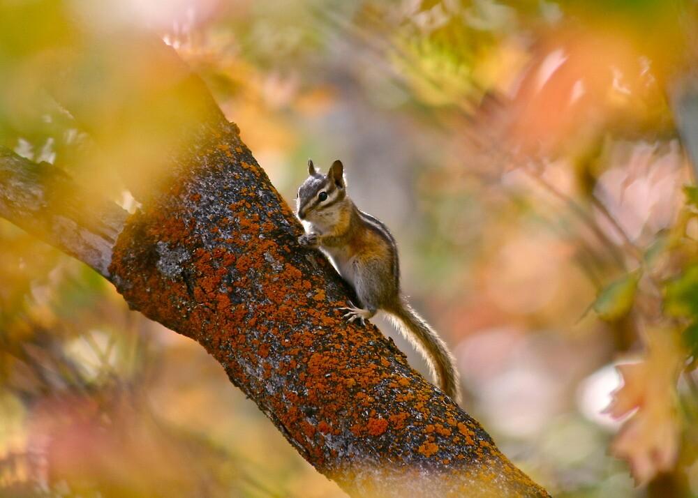 Chimpmunk in Autumn - Park City, Utah by FoxSpirit