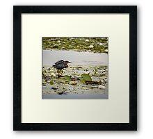 Hammond Pond, MA  Framed Print
