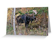 Bull Moose - Park City, Utah Greeting Card