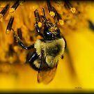 Bee by Dennis Cheeseman