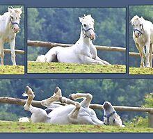 Pony Playtime by missmoneypenny
