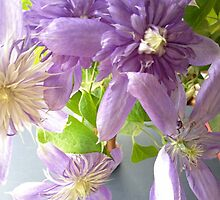 Lavender-Colored Clematis by Barbara Wyeth