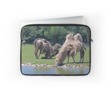 Bactrian Camels Shedding Their Winter Coat Laptop Sleeve