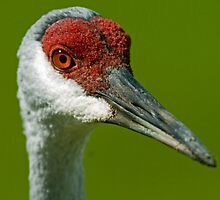 Sandhill eyes by Larry  Grayam