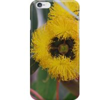 Eucalyptus Erythrocorys front view. iPhone Case/Skin
