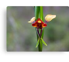 The Donkey Orchid (Diuris corymbosa) Canvas Print