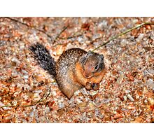Marmot Munchies Photographic Print