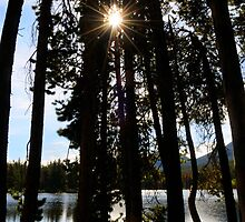 Sunburst Through the Pines by NinaOswald