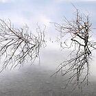 Natural Lake Reflections by Honor Kyne