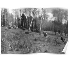 Horse Herd Running in Wooded Pasture on BC Ranch Poster