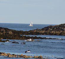 We are Sailing,,,,Yacht passing by Ballycotton Bay,Co. Cork,Ireland. by Pat Duggan