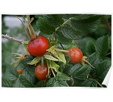 Red fruit. Poster