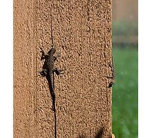 Sedona Lizard Family Photographic Print