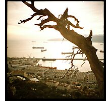 tree over gibraltar Photographic Print