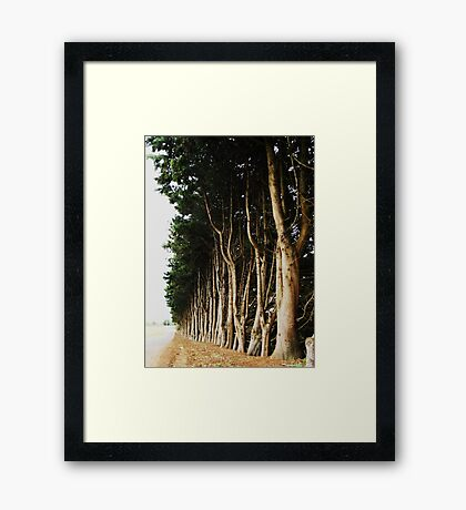 Tree Lined Road Framed Print