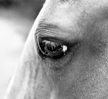Eye of the Horse by Jay Stockhaus