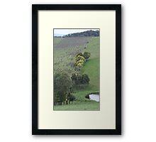 Valley Vineyard Framed Print