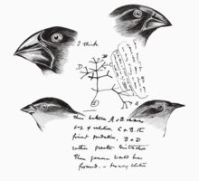 Darwin's Finches by HereticWear