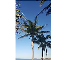 Palms and blue sky Photographic Print
